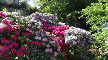 Blumenwolke