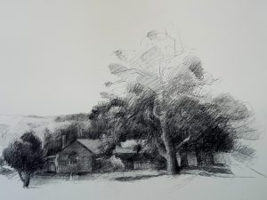 Drawing by Evan Salmon 'House amongst Coral trees (Jamberoo)