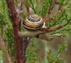A wee snail in Fanshawe Park near London, Ontario on traditional territory of the Anishinaabeg, Haudenosaunee, Attawandaron (Neutral), and Wendat peoples.