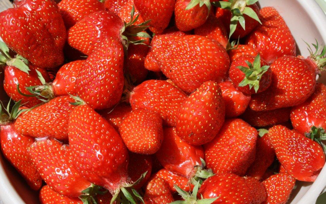 Aux fruits rouges s'il vous plait !