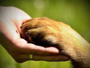 magnetisme animaux, magnetiseur pour animaux, soins magnetiseur pour animaux, magnetiseur pour chien, magnetiseur animaux a distance gratuit
