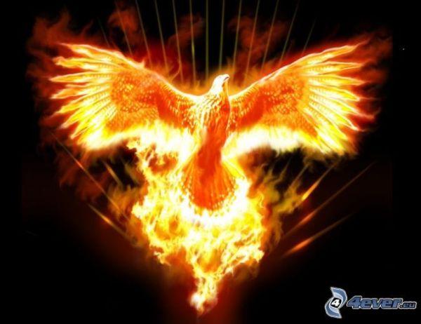 STu phoenix
