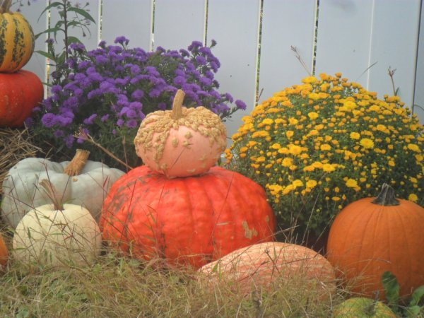 gourds display