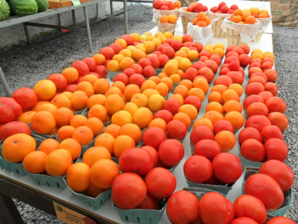 lancaster tomatoes
