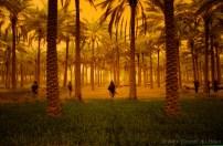 Alex Cornell du Houx Phogography-7