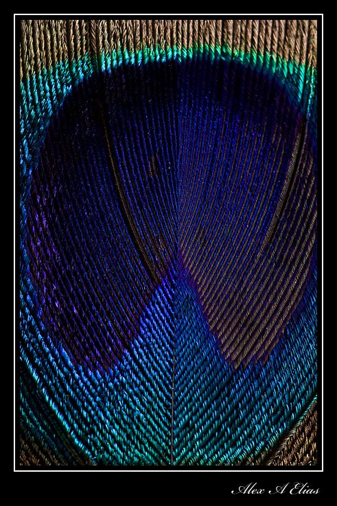 Feathers_0853-copy