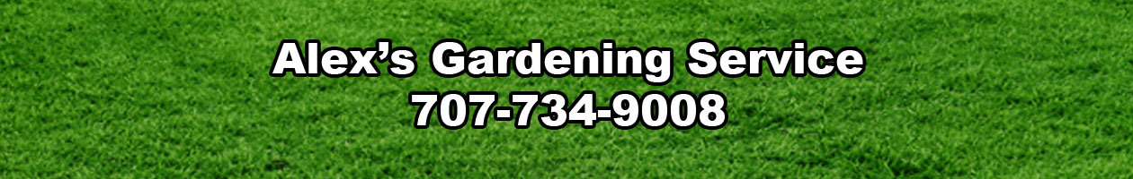Gardening Services in Fort Bragg, California but Reaches Out to Your Area. Ukiah, Elk, Westport, Mendocino, Redwood Valley, Etc. | Alex's Gardening Service