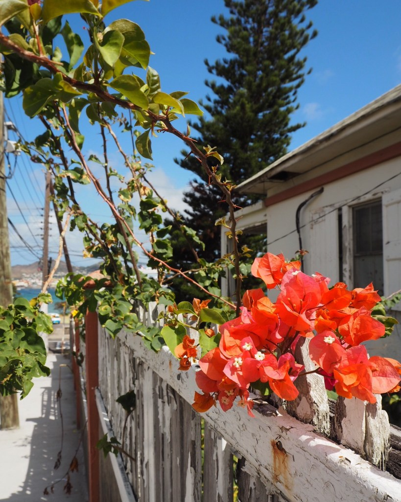 Tropical flowers overlooking the port of Basseterre