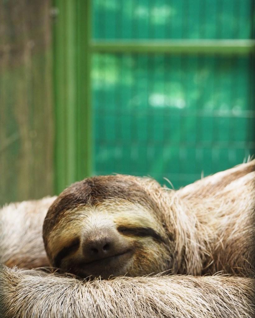 a beautiful sloth in Costa Rica