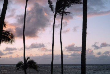skinny palm trees at sunset on kuaui