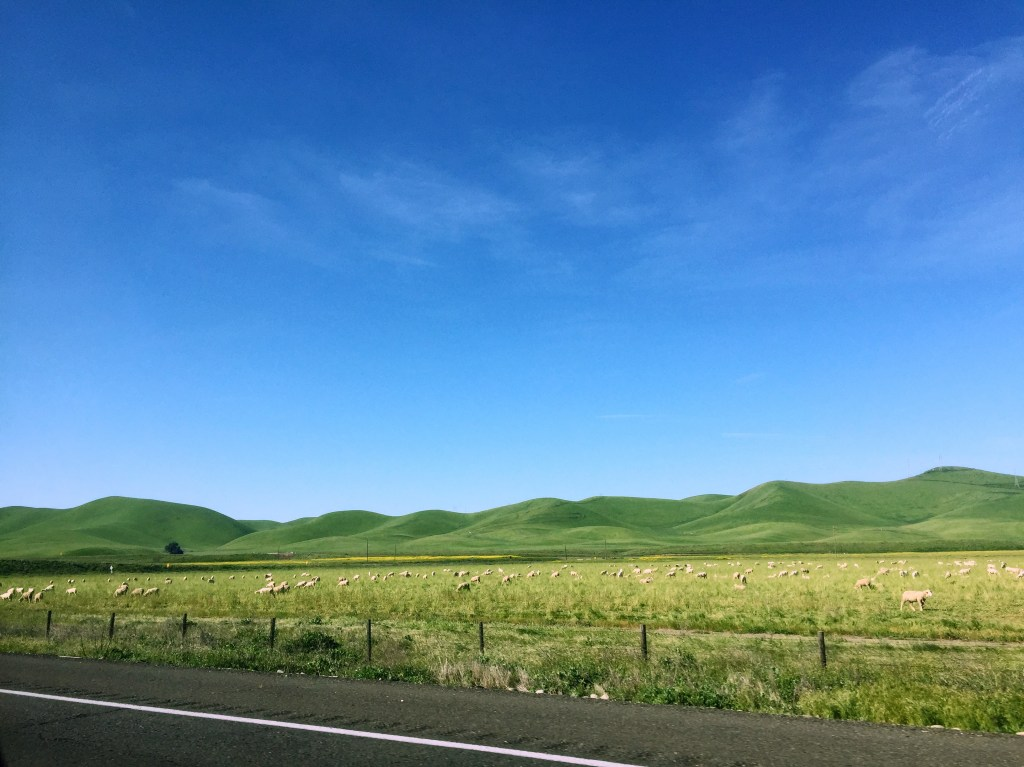 green hills of Central California