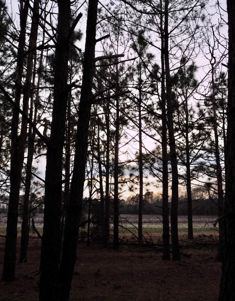 woodland in Scotland County North Carolina