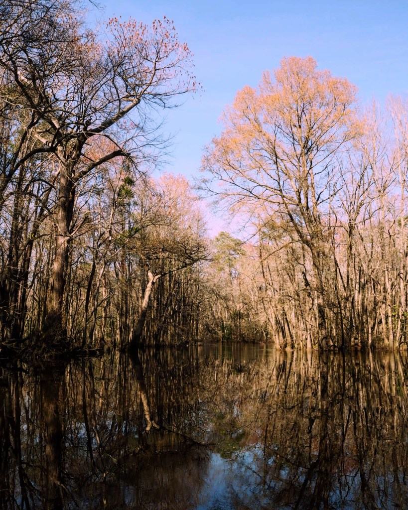Lumbee River in Spring