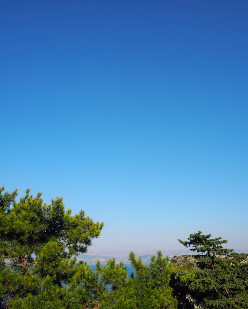 pine trees in Greece