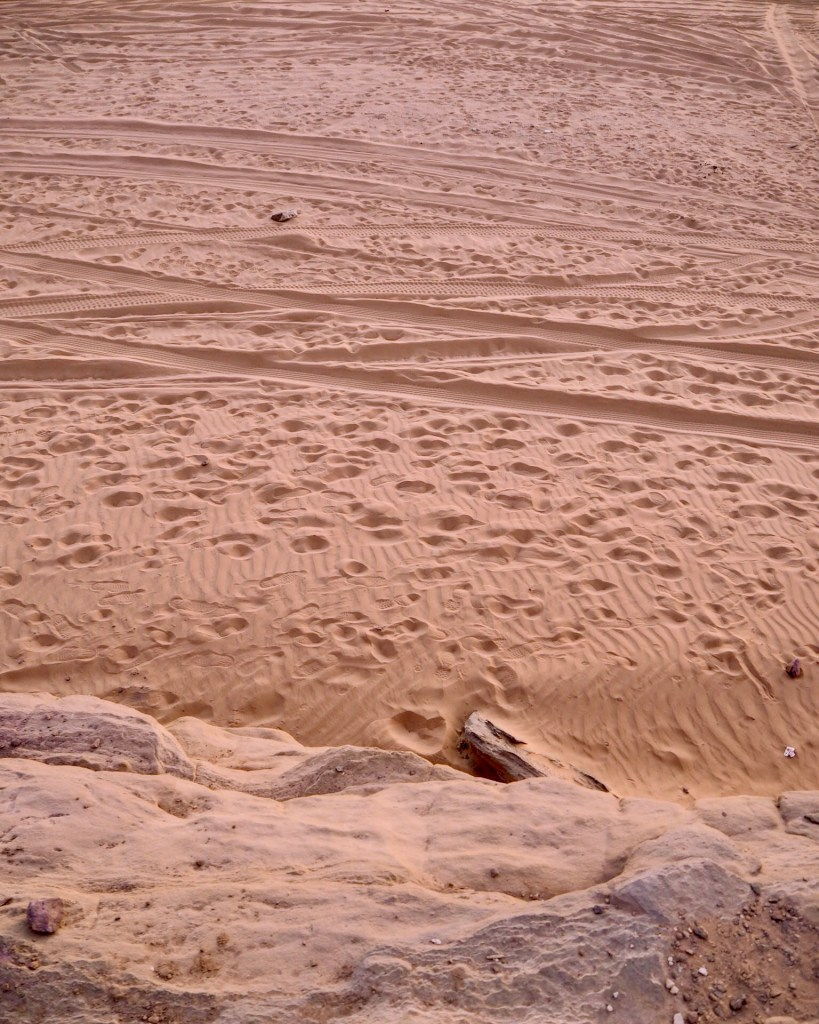 camel prints in the sand