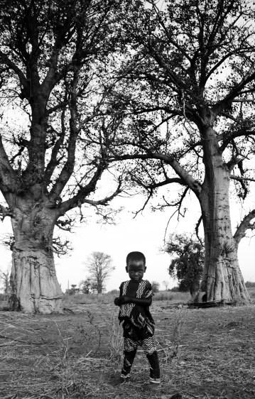 Sert beneath the baobabs