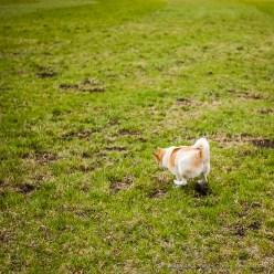 Hund Toni spielt mit Wurfstock auf einer Wiese