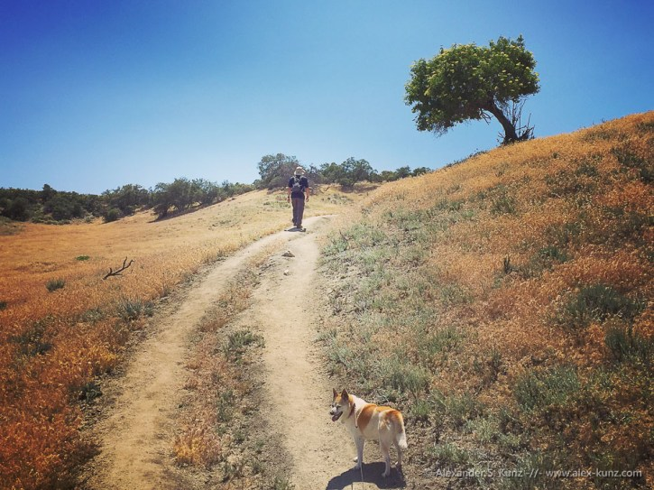 Toni, mein Freund Fred und ein einsamer Holunderbusch, entlang des Pacific Crest Trails nahe Warner Springs im Hinterland von San Diego, im Mai 2016.