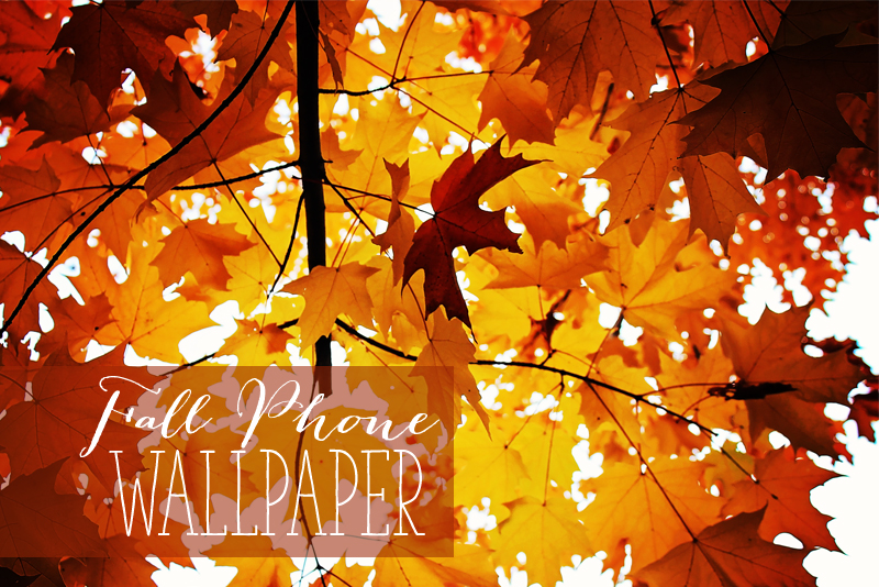 Friday Freebie: Fall Phone Wallpapers | Fall Inspired wallpapers for iphone and galaxyS5 - Alex Inspired