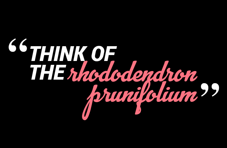 Think of the Rhododendron | Alex Inspired - The Masters - What You Never Wanted to Know