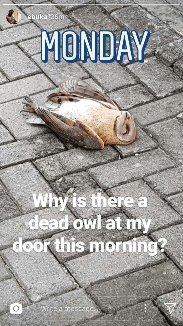 Ebuka Obi-Uchendu in shock after finding a dead owl outside his front door this morning (photo)