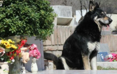 Dog dies next to his master?s grave after refusing to leave the grave for 11 years