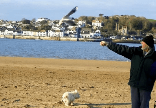 Seagull flies every day to visit 80-year-old man who saved his life 12-years ago (photos)