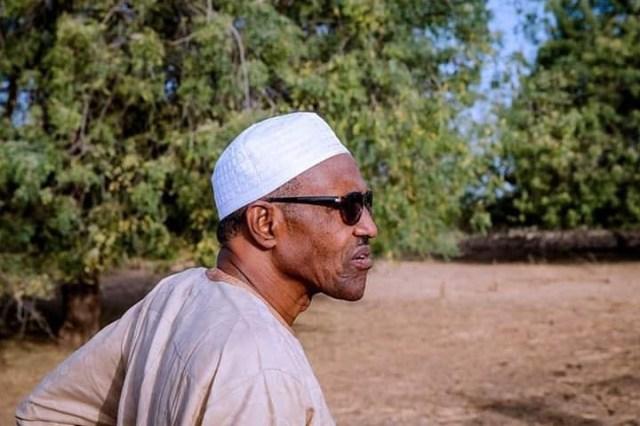 Photos of President Buhari at his farm in Daura today