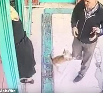 Angry stray cat terrorizes men and dogs outside market but lets women and children pass