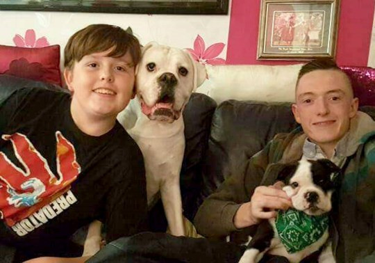 Boy paralysed after dog pulled cushion from under him as he laid on the sofa