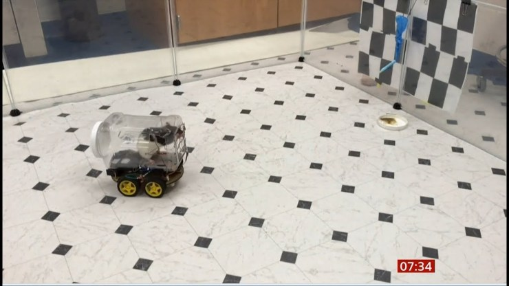 Rats taught how to drive to lower their stress levels (video)