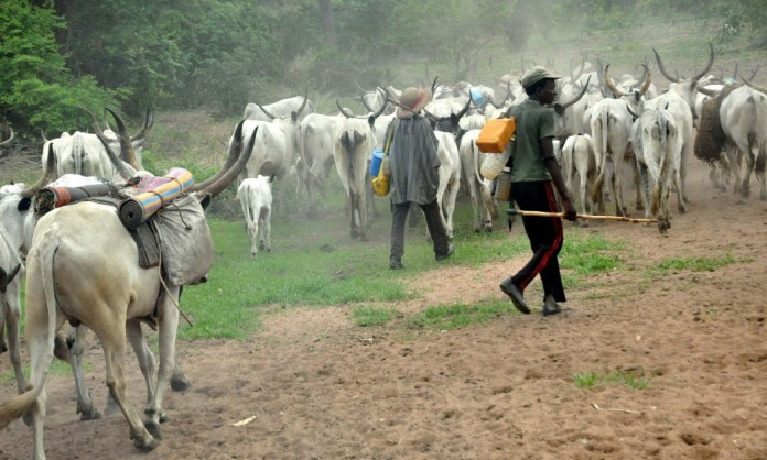 Man killed over cow in Delta State