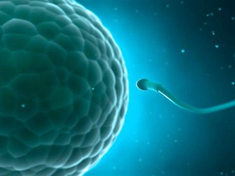 Women?s eggs prefer some men?s sperm over others, new research shows