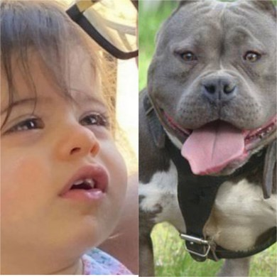 Baby mauled to death by grandparents' pit bull dog