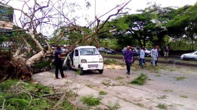Eight escapes death as huge tree falls on commercial bus in Calabar