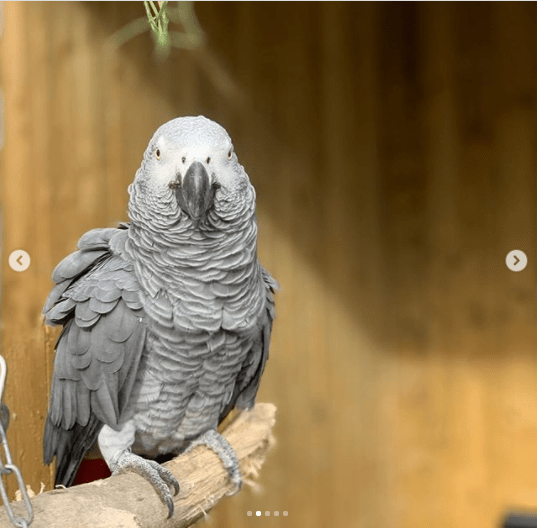Five foul-mouthed parrots separated at a British wildlife park after swearing at customers?(photos)