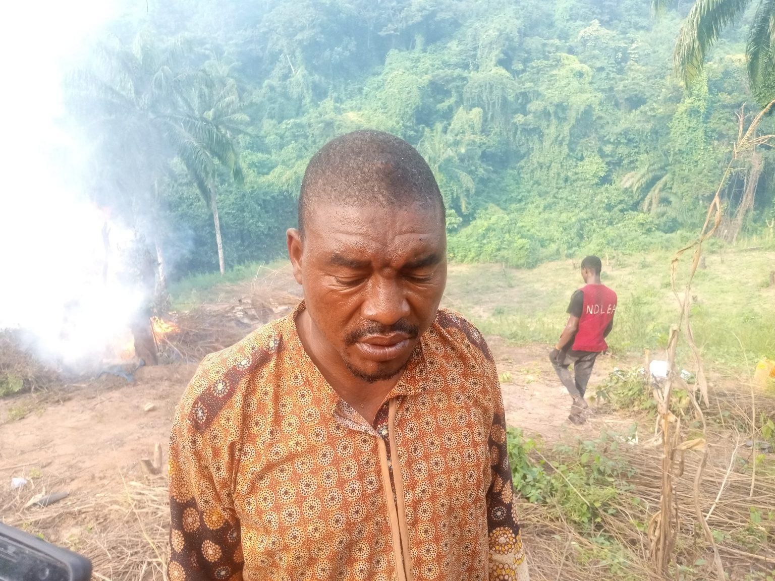 Suspects arrested as NDLEA destroys cannabis plantation worth over N1.5bn in Kogi