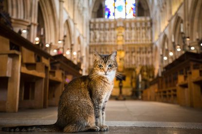 London church holds memorial service for stray cat who lived in the cathedral for 12 years (photos)