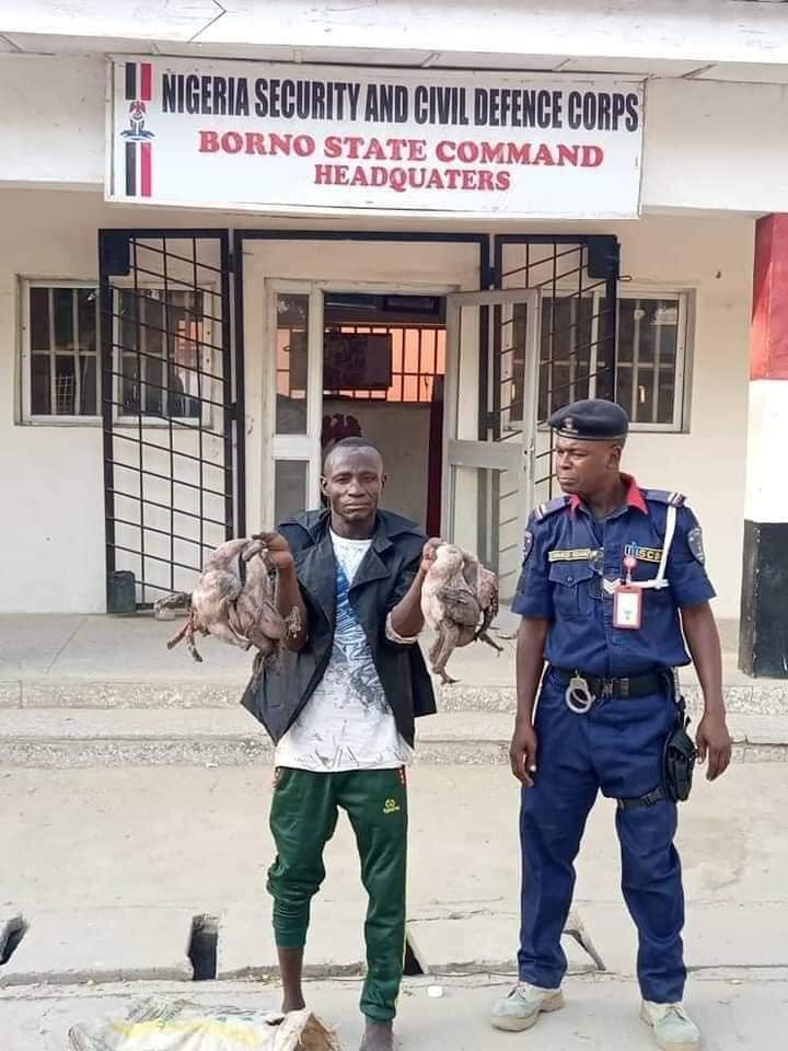 Update: Suspect paraded with dead poultry meat he picks from river to sell in Maiduguri (photos)