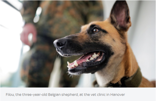 Scientists have trained sniffer dogs to detect coronavirus with 94% accuracy