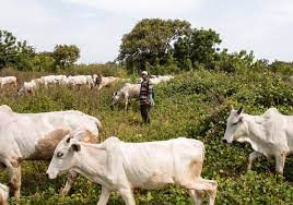 Suspected herdsmen attack farmer in Oyo