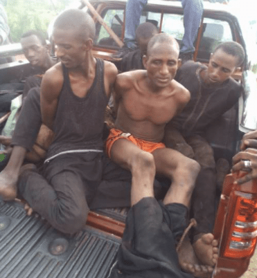 Amotekun and OPC members arrest 6 bandits in Oyo forest with 183 Cows, Weapons, Cash (photos)