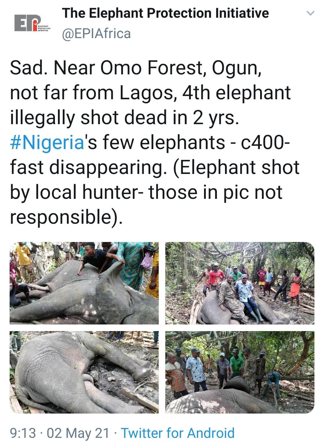 Local hunters kill 4th elephant in 2 years in Ogun state