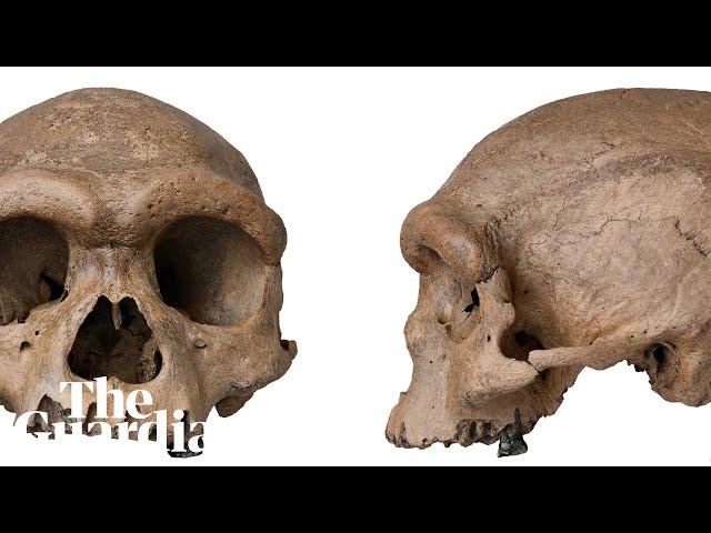 Scientists unveil Homo longi aka