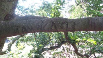 Jamaica '93 Engraved in a Tree - New York Botanical Garden