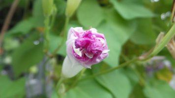 Pink Flower - New York Botanical Gardens
