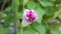 pink flower travel new york botanical garden