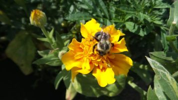 new york botanical garden bee flower