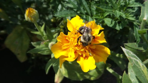 new york botanical garden bee flower
