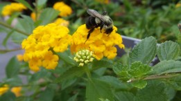 New York Botanical Gardens bee flower travel